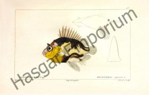 Pentaceros Capensis Reproduction Photograph available framed