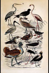 Flamingo Heron Birds Reproduction Photograph available framed