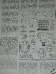 Print-over-100-years-old-Gems-and-Precious-Stones-190332268417