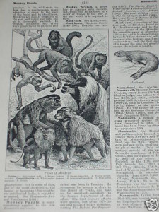 Print-over-100-years-old-Types-of-Monkeys-190331387417